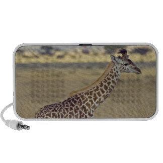 Jirafa del Masai (camelopardalis del Giraffa Mp3 Altavoz