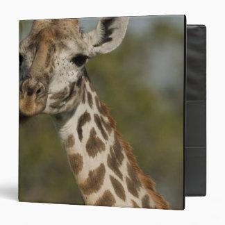 """Jirafa del Masai, camelopardalis del Giraffa Carpeta 1 1/2"""""""