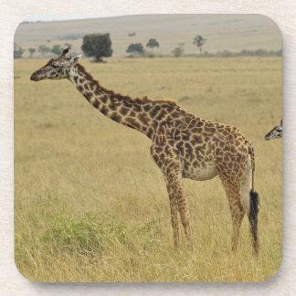 Jirafa del Masai de la madre y del bebé, Giraffa 2 Posavasos De Bebidas