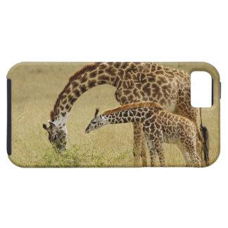 Jirafa del Masai de la madre y del bebé Giraffa iPhone 5 Cárcasas