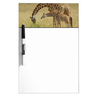 Jirafa del Masai de la madre y del bebé, Giraffa Pizarras Blancas De Calidad