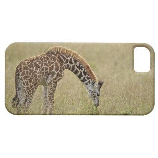 Jirafa del Masai del bebé, camelopardalis del Gira iPhone 5 Coberturas