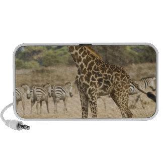 Jirafa del Masai y cebra común en Amboseli NP, iPod Altavoces