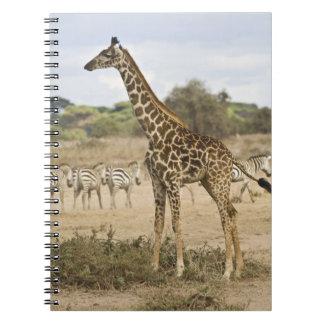 Jirafa del Masai y cebra común en Amboseli NP, Spiral Notebook