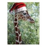 Jirafa del navidad tarjetas postales