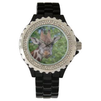 Jirafa dulce de los objetos curiosos reloj