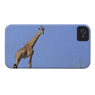 Jirafa en canto contra el cielo azul Giraffa