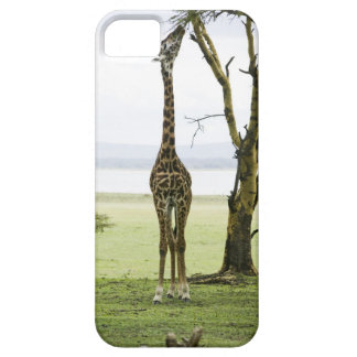 Jirafa en Kenia, África iPhone 5 Cárcasa