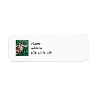 Jirafa estoy encima de etiquetas del remite aquí etiqueta de remitente