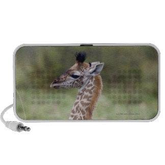 Jirafa joven del Masai (camelopardalis del Giraffa Altavoces De Viaje
