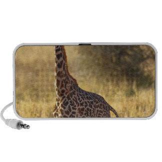 Jirafa juvenil, camelopardalis 2 del Giraffa iPod Altavoces