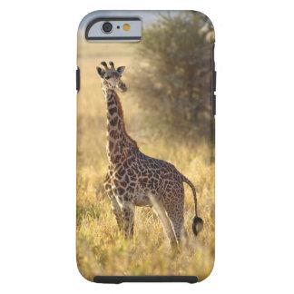 Jirafa juvenil, camelopardalis 2 del Giraffa Funda Para iPhone 6 Tough