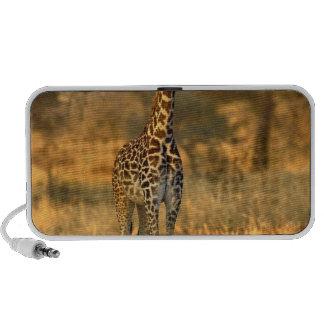 Jirafa juvenil, camelopardalis del Giraffa Laptop Altavoces
