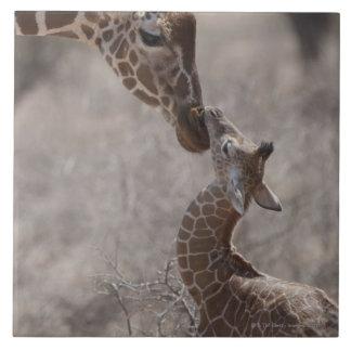 Jirafa, Kenia, África Tejas