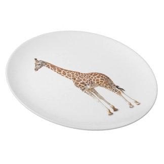 Jirafa larga del cuello plato de comida