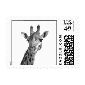 Jirafa negra y blanca timbres postales