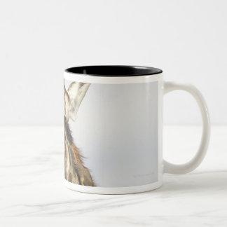 Jirafa, parque nacional de Kruger, Suráfrica Tazas De Café