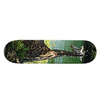 Jirafa que se sienta debajo de un parque zoológico patinetas personalizadas