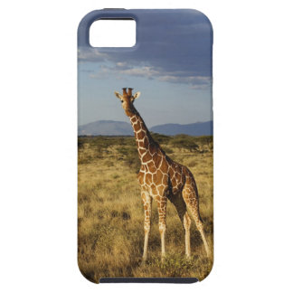 Jirafa reticulada, camelopardalis 2 de la jirafa iPhone 5 protectores