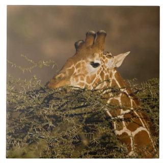 Jirafa reticulada, camelopardalis de la jirafa tejas  ceramicas