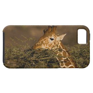 Jirafa reticulada, camelopardalis de la jirafa iPhone 5 Case-Mate cárcasa