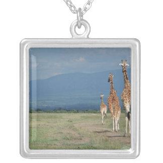 Jirafa reticulada (camelopardalis del Giraffa) 2 Collar Plateado