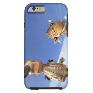 Jirafa reticulada (camelopardalis del Giraffa) 3 Funda Para iPhone 6 Tough