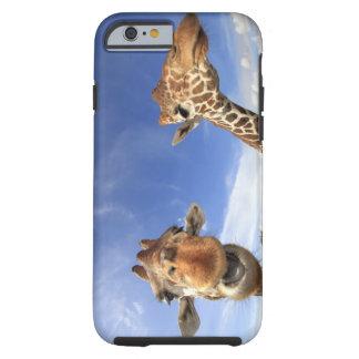 Jirafa reticulada (camelopardalis del Giraffa) Funda De iPhone 6 Tough