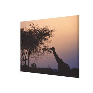Jirafa reticulada impresión en lienzo