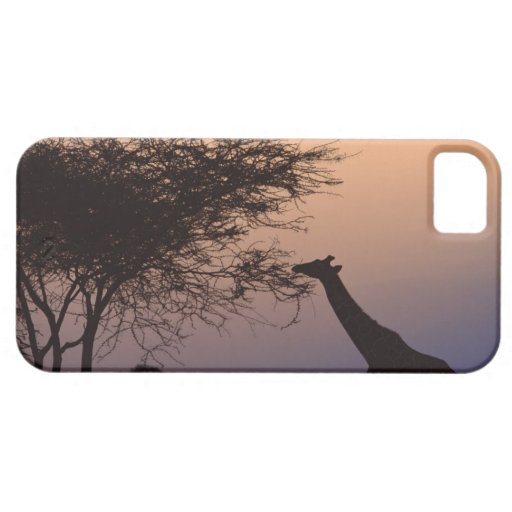 Jirafa reticulada iPhone 5 carcasas