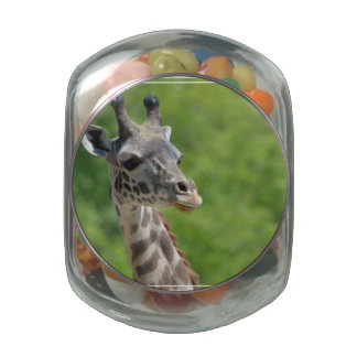 Jirafa salvaje jarras de cristal