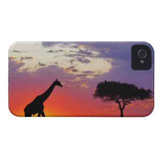 Jirafa silueteada en la salida del sol Giraffa