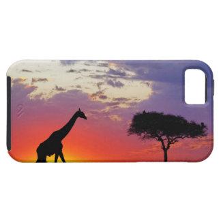 Jirafa silueteada en la salida del sol Giraffa iPhone 5 Carcasa