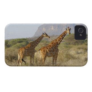 Jirafa somalí, jirafa reticulada, Giraffa Case-Mate iPhone 4 Carcasa