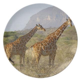 Jirafa somalí, jirafa reticulada, Giraffa Platos De Comidas