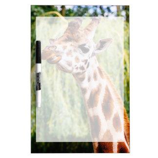 Jirafa sonriente, animal que muestra sus dientes tablero blanco