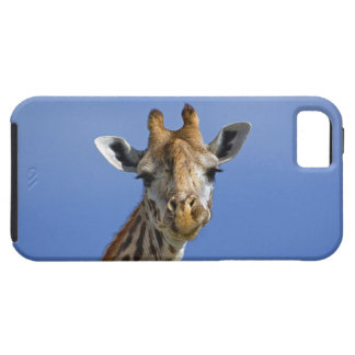 Jirafa tippelskirchi de los camelopardalis del Gi iPhone 5 Case-Mate Coberturas