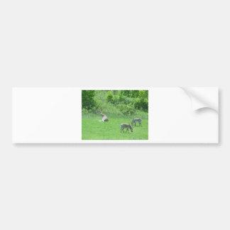 Jirafa y cebras que pastan durante el verano pegatina de parachoque