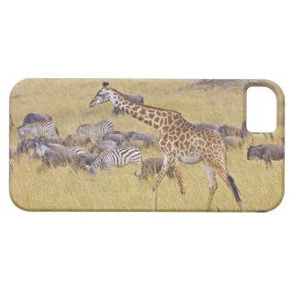 Jirafas de Maasai que vagan por a través del Maasa iPhone 5 Protectores