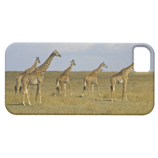 Jirafas de Maasai que vagan por a través del Maasa iPhone 5 Carcasas