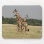 Jirafas de Massai Tapete De Ratón