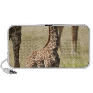 Jirafas del Masai, camelopardalis 2 del Giraffa iPod Altavoz