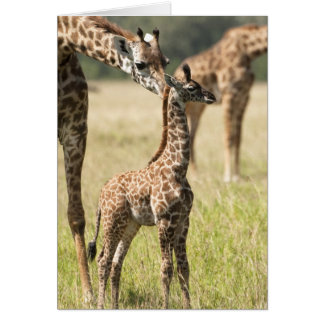 Jirafas del Masai, camelopardalis 2 del Giraffa Tarjeta De Felicitación