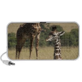 Jirafas del Masai, camelopardalis del Giraffa Altavoz