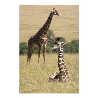 Jirafas del Masai, camelopardalis del Giraffa Impresion Fotografica