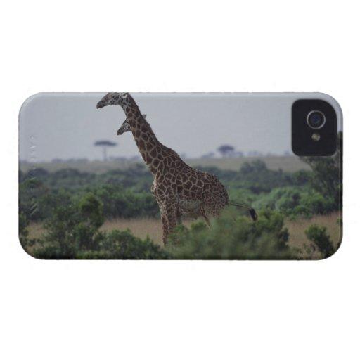 Jirafas en África iPhone 4 Cobertura