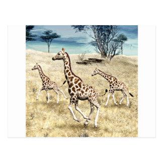 Jirafas en el llano de la sabana tarjetas postales