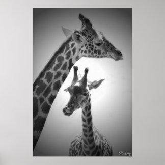 jirafas, madre y niño póster