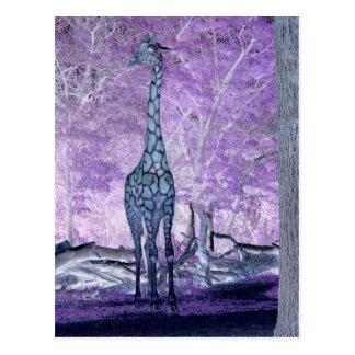 Jirafas púrpuras tarjetas postales