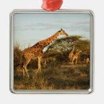 Jirafas reticuladas, camelopardalis 2 de la jirafa adorno navideño cuadrado de metal